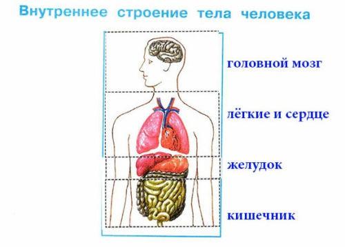 Строение тела человека - Плешаков 2 класс 2 часть. Рабочая тетрадь