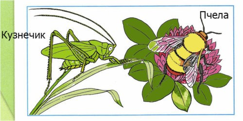 Кто такие насекомые? - Плешаков 1 класс 1 часть. Рабочая тетрадь