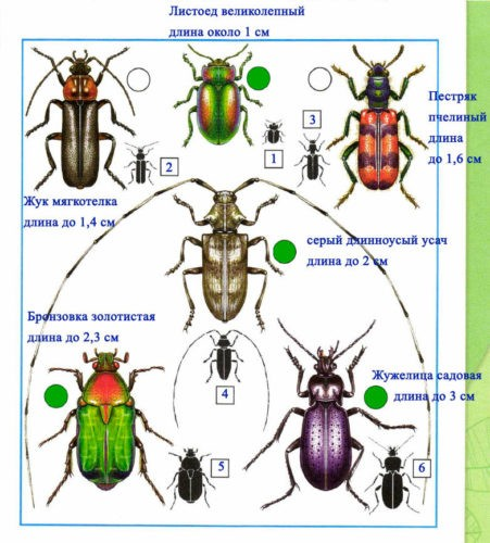 Кто такие насекомые?