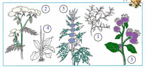 Какие бывают растения