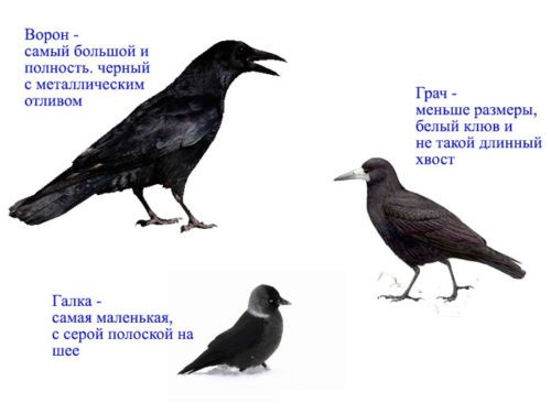 Кто такие птицы?