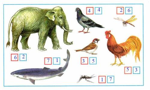 Какие бывают животные