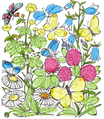 Почему мы не будем рвать цветы и ловить бабочек?