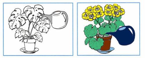 Как живут растения? - Плешаков 1 класс 1 часть. Рабочая тетрадь