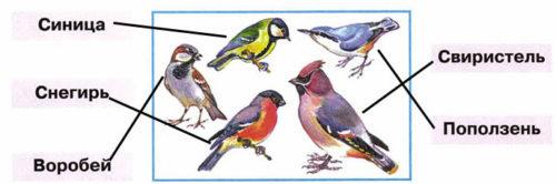Как зимой помочь птицам? - Плешаков 1 класс 1 часть. Рабочая тетрадь