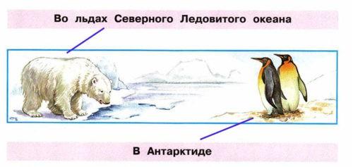 Где живут белые медведи? - Плешаков 1 класс 2 часть. Рабочая тетрадь