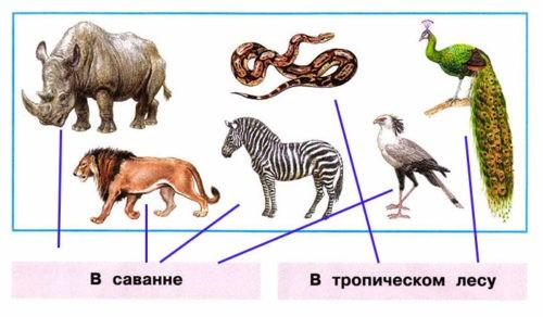 Где живут слоны? - Плешаков 1 класс 2 часть. Рабочая тетрадь