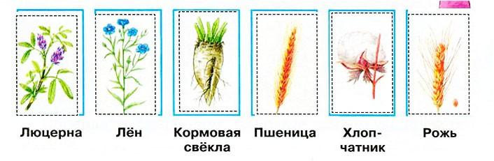 Растениеводство - Плешаков 3 класс 2 часть. Рабочая тетрадь