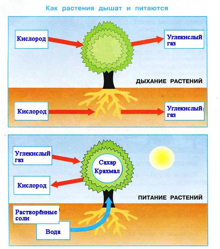 Солнце, растения и мы с вами
