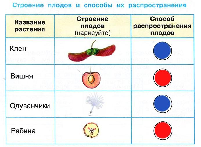 Размножение и развитие растений