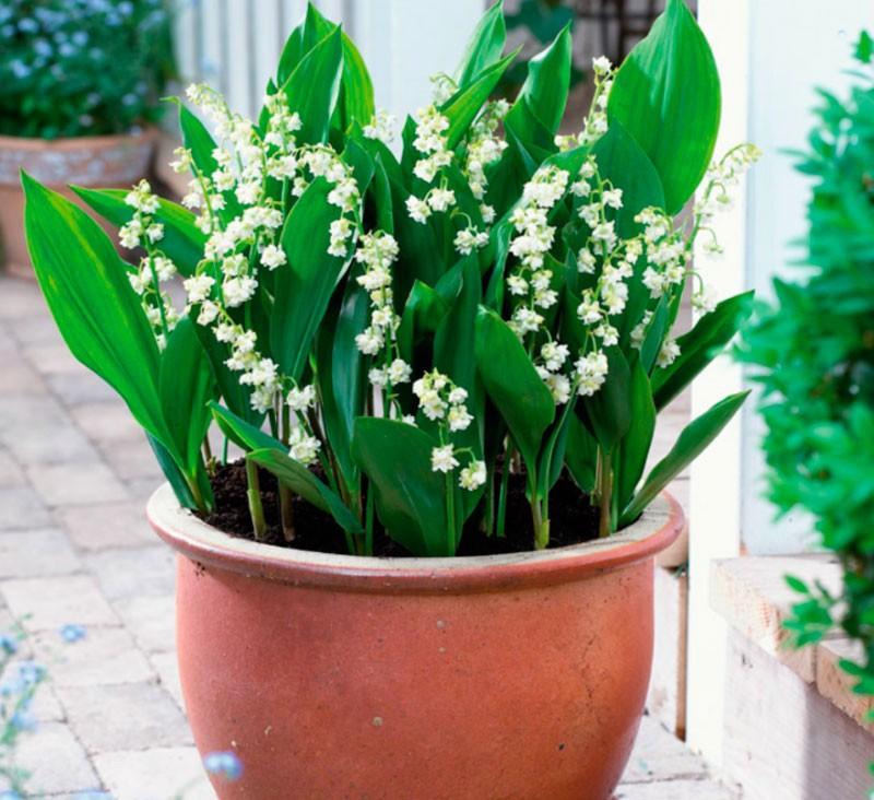 Охрана растений - Плешаков 3 класс 1 часть. Рабочая тетрадь