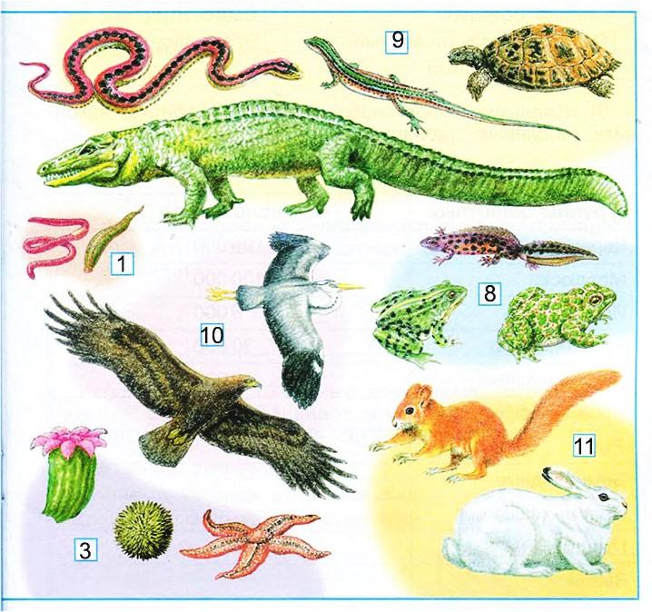 Разнообразие животных - Плешаков 3 класс 1 часть. Рабочая тетрадь