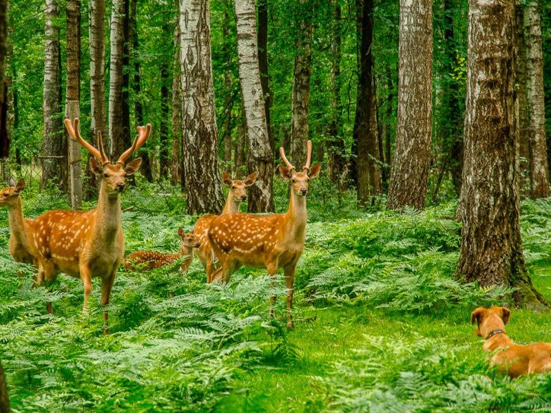 Проект «Разнообразие природы родного края»