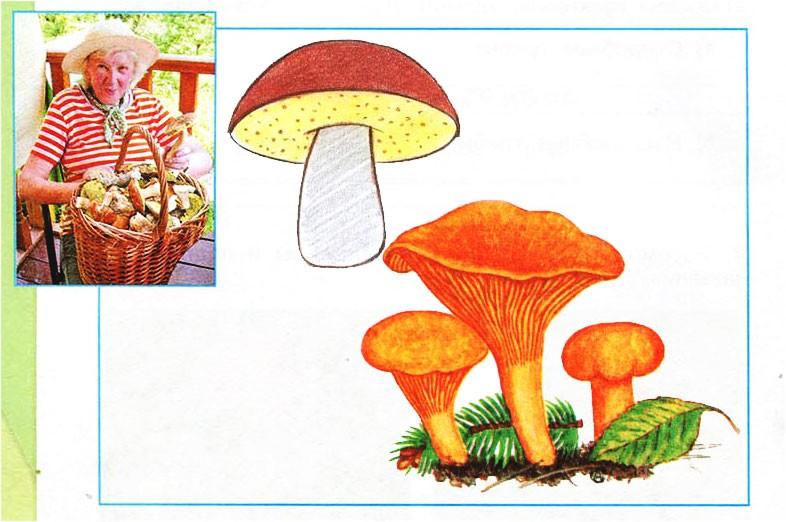 В царстве грибов - Плешаков 3 класс 1 часть. Рабочая тетрадь