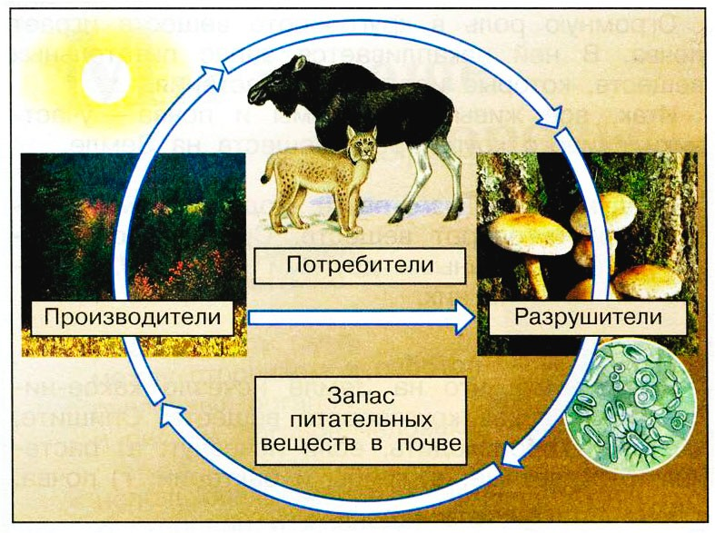 Великий круговорот жизни - Плешаков 3 класс 1 часть. Рабочая тетрадь