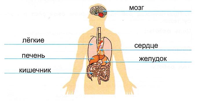 Организм человека - Плешаков 3 класс 1 часть. Рабочая тетрадь