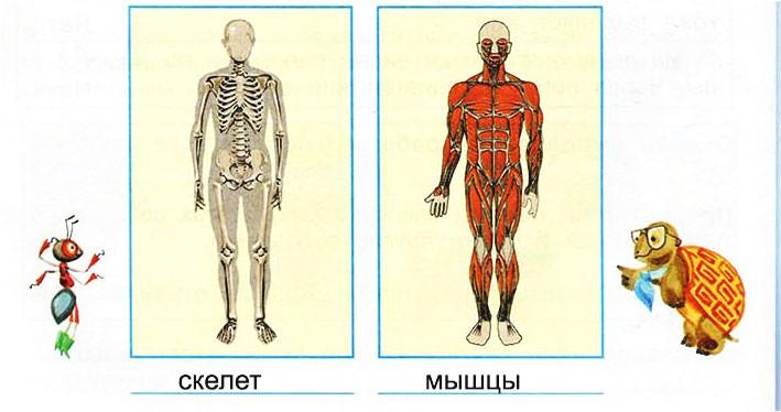 Опора тела и движение