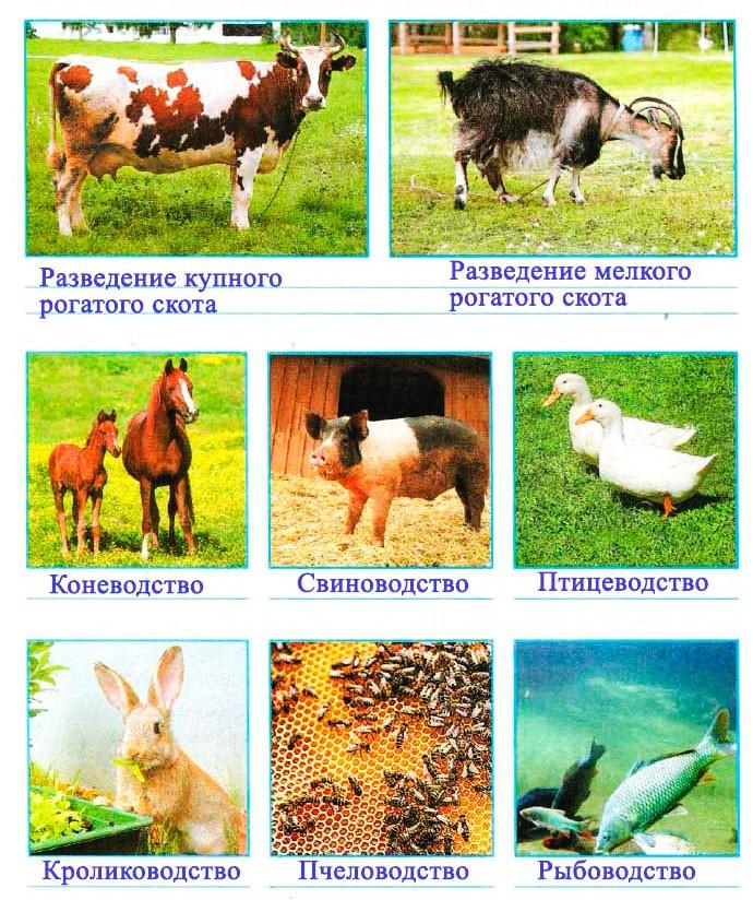 Животноводство в нашем крае