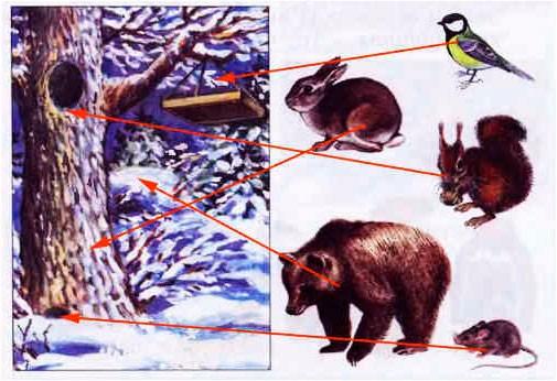 § 15. Зима: покой природы