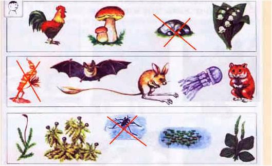 § 24. Растения и животные