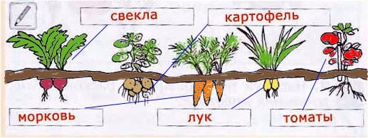 § 27. Наши помощники - домашние животные и культурные растения