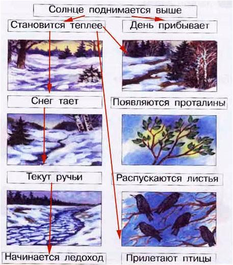 § 31. Отчего и почему - Вахрушев 1 класс. Рабочая тетрадь
