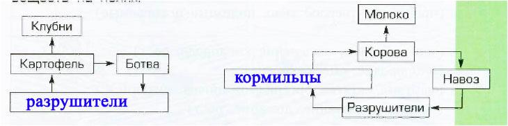 § 10. Жизнь экосистемы