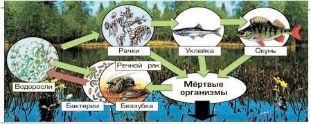 § 12. Экосистема озера - Вахрушев 3 класс 1 часть. Рабочая тетрадь