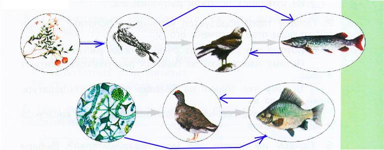 § 13. Экосистема болота