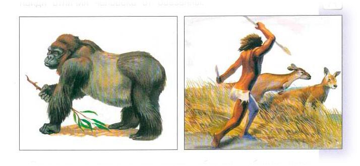 Тема 14. Наши предки - древесные жители - Вахрушев 4 класс 1 часть. Рабочая тетрадь