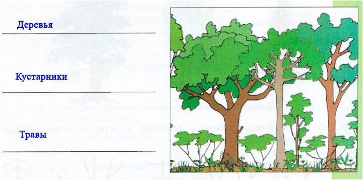 § 15.Лесные производители - Вахрушев 3 класс 1 часть. Рабочая тетрадь