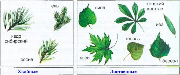 § 15.Лесные производители