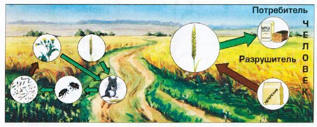 § 17. Экосистема поля