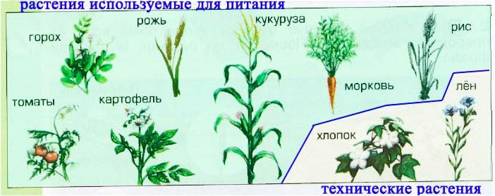 § 17. Экосистема поля - Вахрушев 3 класс 1 часть. Рабочая тетрадь