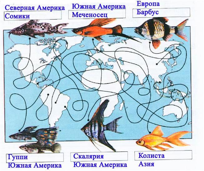 § 18. Аквариум - маленькая искусственная экосистема
