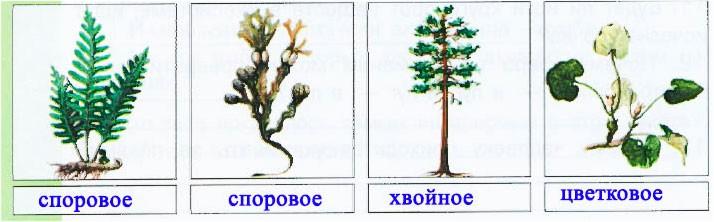 § 19. Растения - производители - Вахрушев 3 класс 1 часть. Рабочая тетрадь