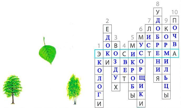 § 19. Экологические системы