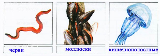 § 20. Животные маленькие и большие - Вахрушев 3 класс 1 часть. Рабочая тетрадь