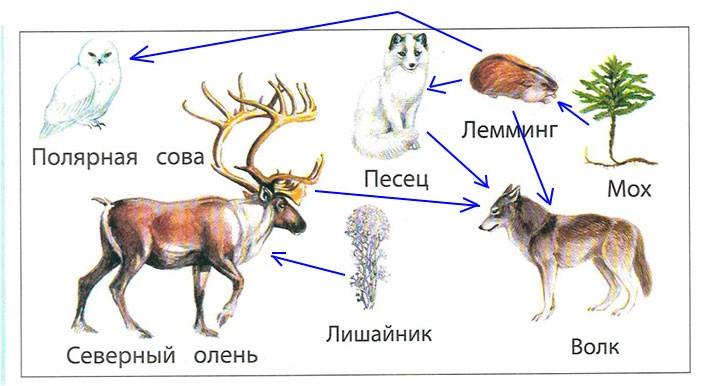 § 21. Природные зоны полярного пояса - Вахрушев 2 класс. Рабочая тетрадь