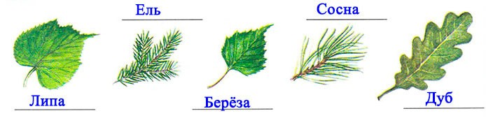 § 22. Леса умеренного пояса
