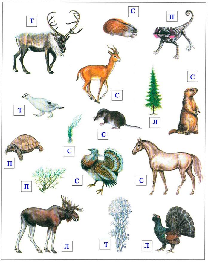 § 23. Засушливые зоны умеренного пояса