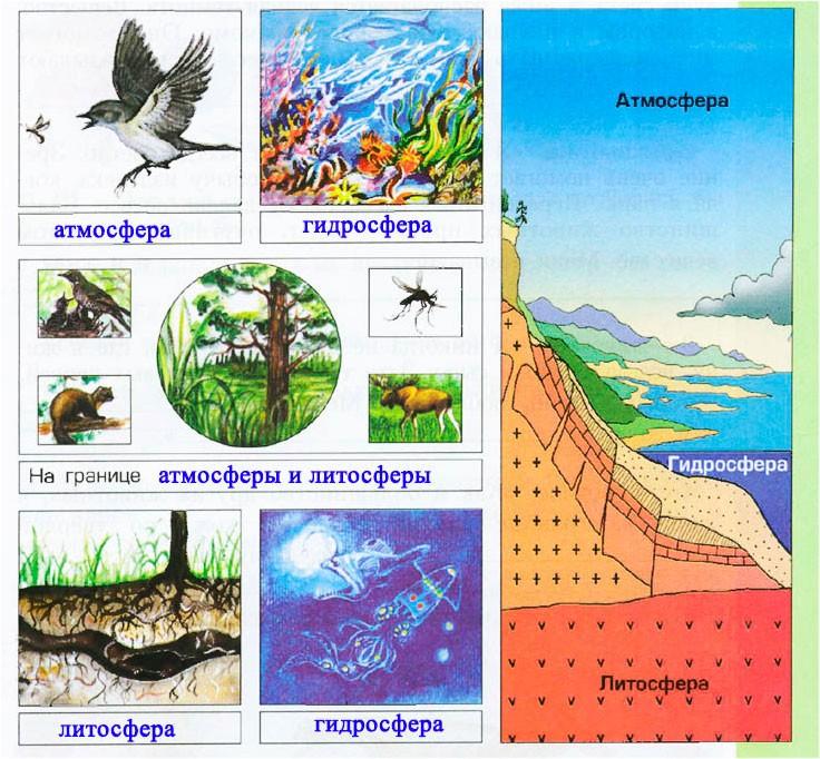 § 5. Где обитают живые организмы - Вахрушев 3 класс 1 часть. Рабочая тетрадь