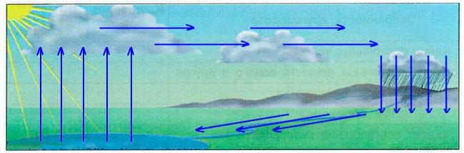 § 6. Большой круговорот веществ - Вахрушев 3 класс 1 часть. Рабочая тетрадь