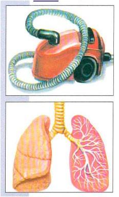Тема 6. Для чего и как мы дышим
