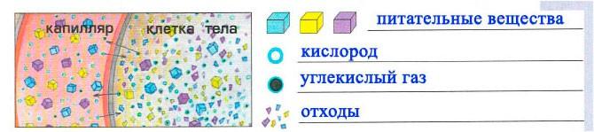 Тема 7. Волшебная восьмёрка - Вахрушев 4 класс 1 часть. Рабочая тетрадь