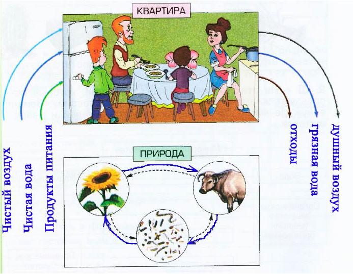 § 7. Живые участники круговорота веществ - Вахрушев 3 класс 1 часть. Рабочая тетрадь