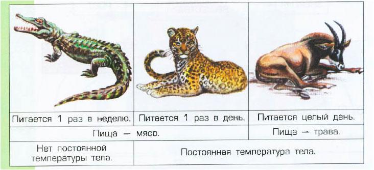 § 8. Обмен веществ в организме