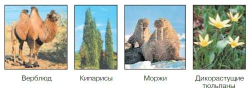 Природные зоны России - Плешаков 4 класс 1 часть. Учебник