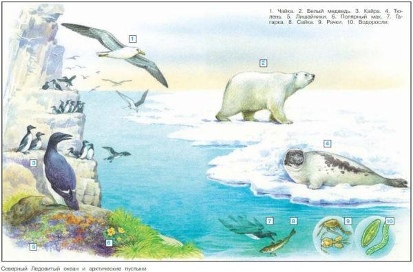 Зона арктических пустынь - Плешаков 4 класс 1 часть. Учебник