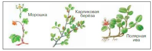 Тундра - Плешаков 4 класс 1 часть. Учебник